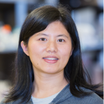 Ying Zheng, PhD <br /> (Bioengineering)